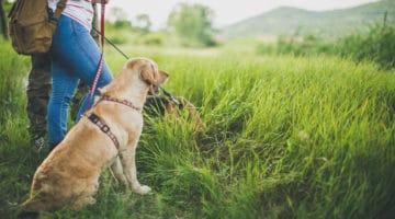 Deutschlands Schönheiten mit Hund entdecken