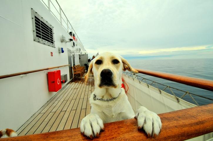Hund auf Schiff
