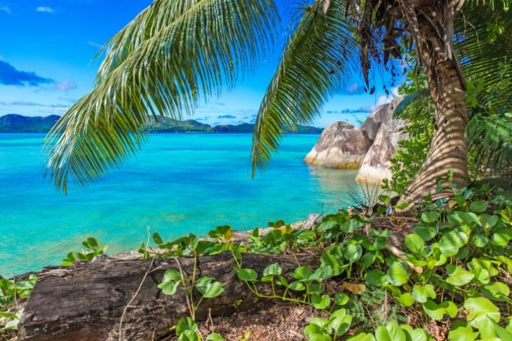 Türkisblaues Wasser, Palmen und Traumstrände - die Karibik ist seit jeher ein Sehnsuchtsort für Urlauber aus der ganzen Welt.