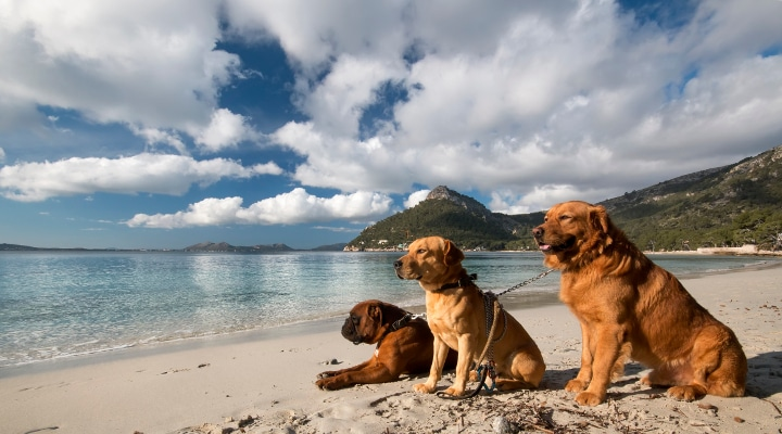 Landscape of the island of Mallorca in Spain with dogs