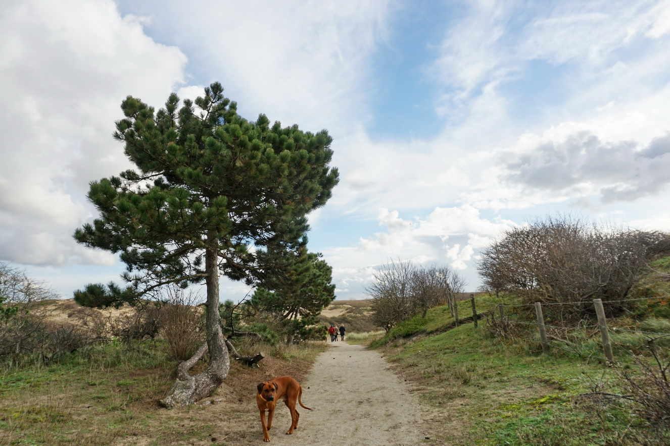 Mit dem Hund nach Noordwijk Freiheit frei Haus