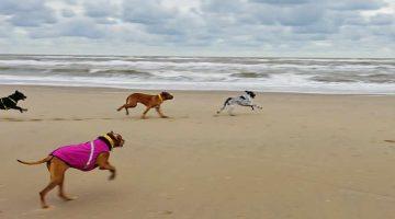 Mit dem Hund nach Noordwijk