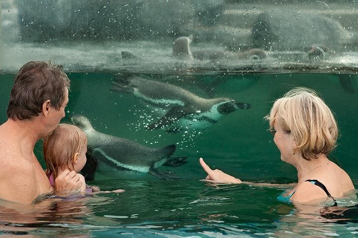 In der Spreewelten-Therme in Lübbenau können Groß & Klein mit Pinguinen um die Wette schwimmen