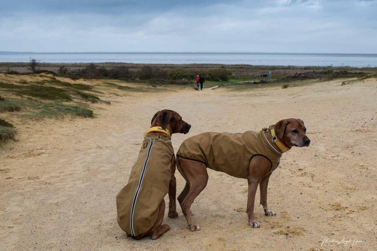 Morsum Kliff - Die Hunde sind-gut geschützt gegen Wind und Wetter auf Sylt