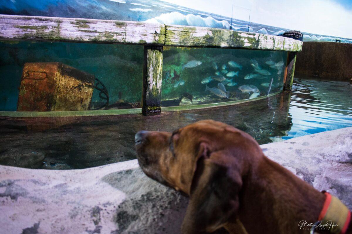 Sylt Aquarium in Westerland