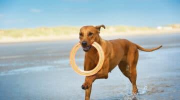 Urlaub mit Hund auf Sylt