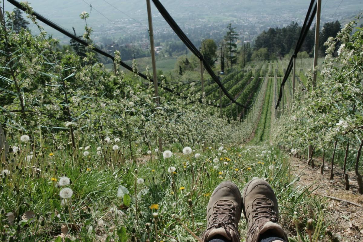 Wanderschuhe bei der Rast zur Apfelblüte in Südtirol