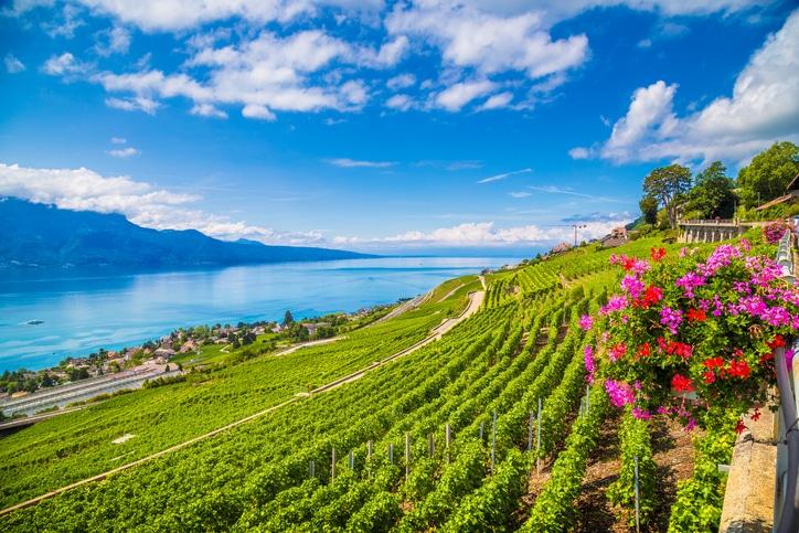 Lavaux Weinterrassen am Genfer See