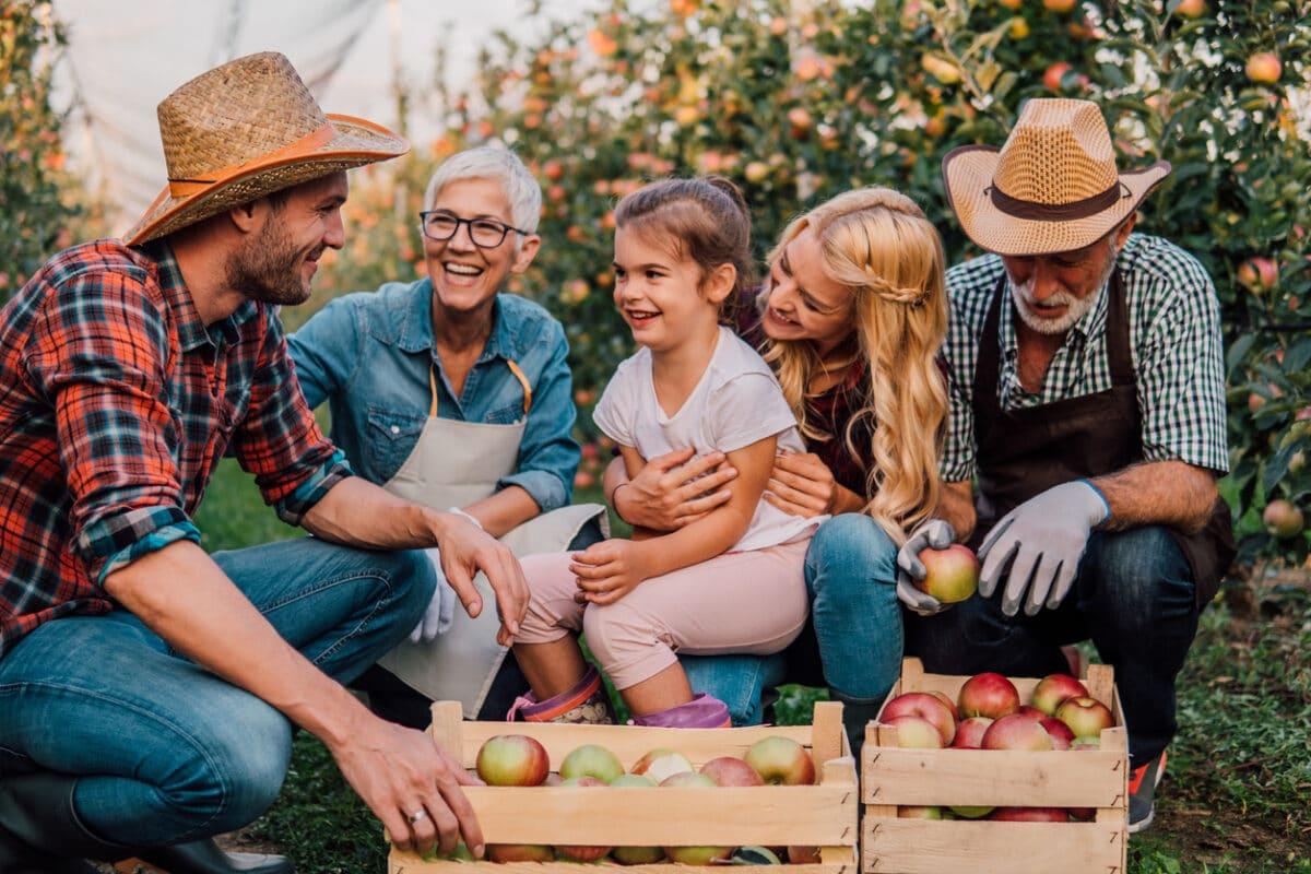 Apfelernte im Alten Land - ein tolles Erlebnis für Jung und Alt