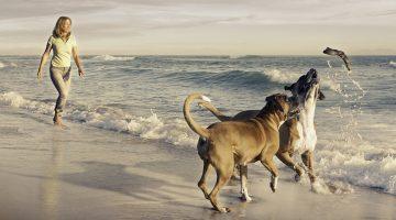 10 hilfreiche Tipps für den Urlaub mit Hund