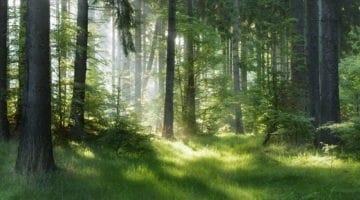 Wald-Wellness: Die Kraft aus der Natur schöpfen
