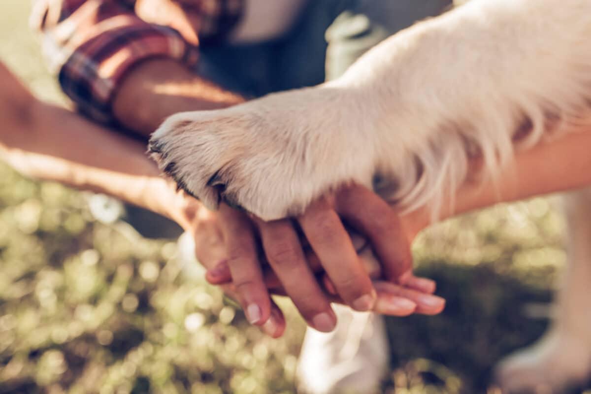 Fliegen mit Hund sollte entspannt ablaufen