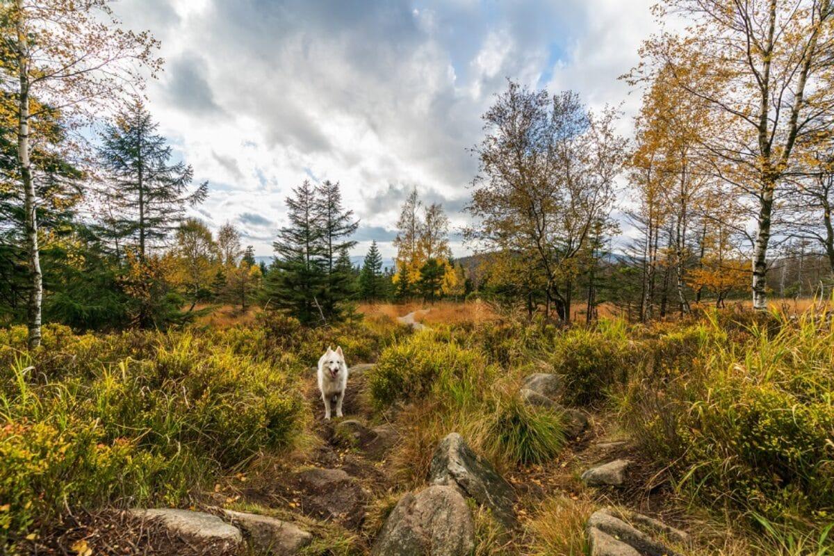 Silvester mit Hund im Harz